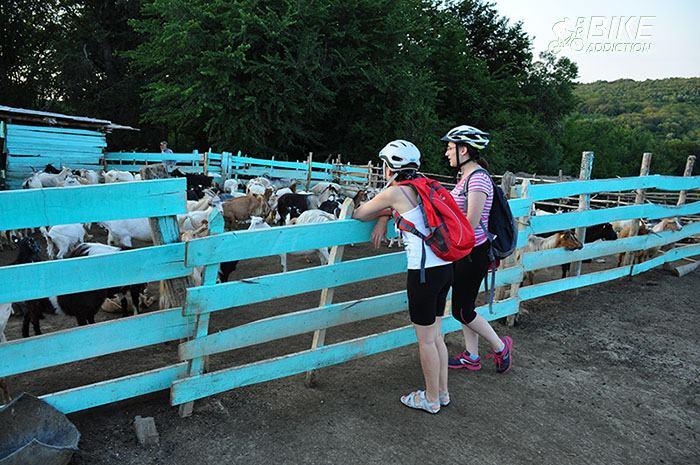 probikeaddiction cicloturism poiana cu cetate 5